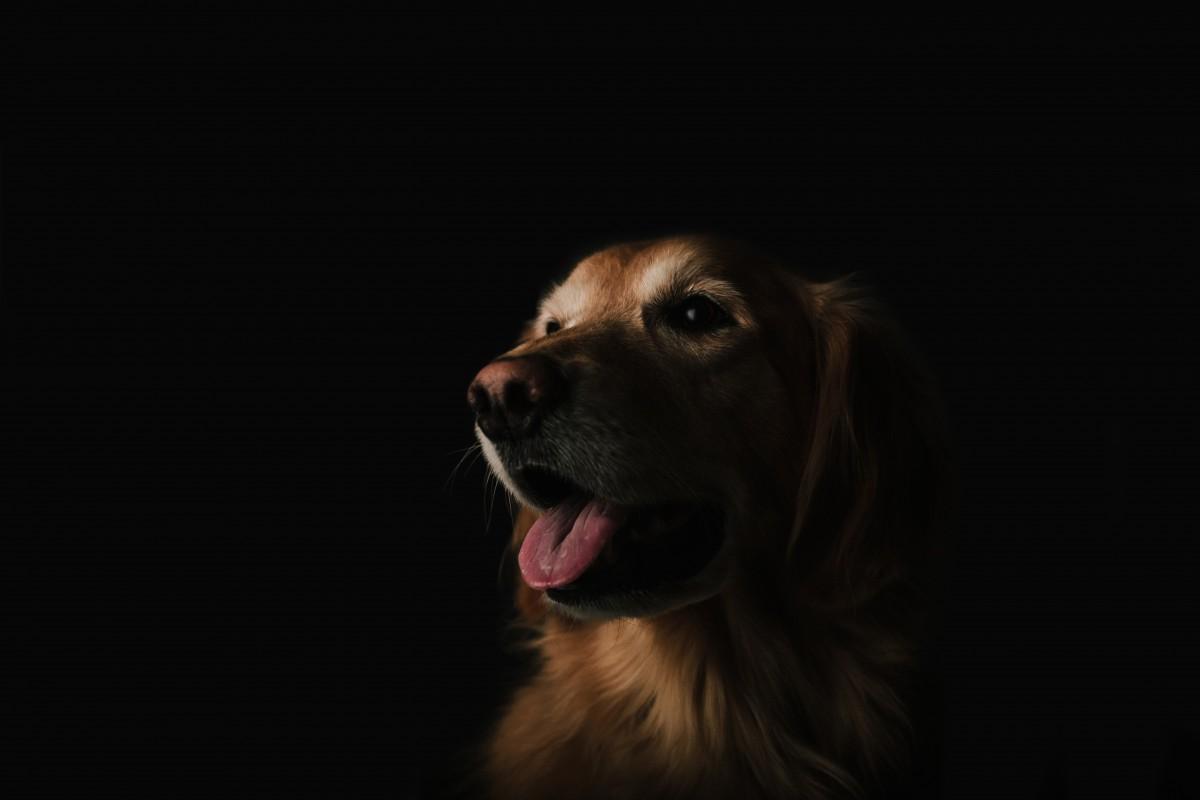 chien-hurleur