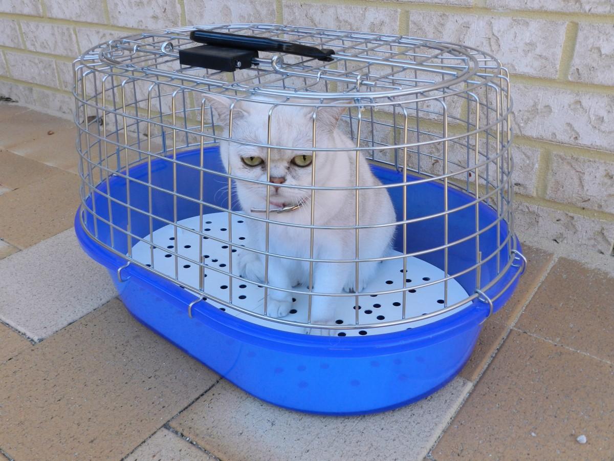 veterinaire-chat